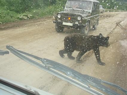 В 2008 году на Сахалине и Курилах вынужденно отстрелили 40 медведей