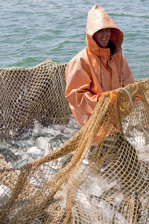 Стартовал второй этап лососевой путины